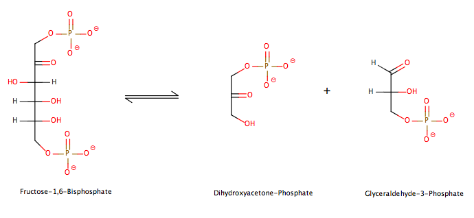 Chapter 14 Glycolysis, Gluconeogenesis, and the Pentose
